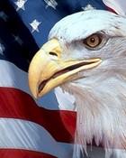 Eagle!!! wallpaper 1