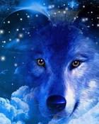Native Wolf.jpg wallpaper 1