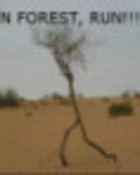 run forest.jpg