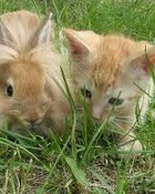 Bunny and A Kitten