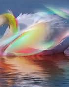 Rainbow Swan