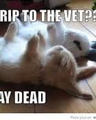 Bunnies Playing Dead