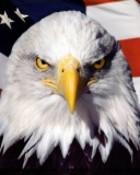 american_patriot.jpg