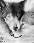 love-wolves.jpg wallpaper 1