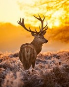 deer-sunset.jpg