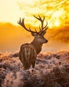 deer-sunset.jpg wallpaper 1