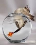 Cat in bowl..jpg