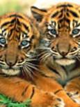 Free 2 tiger cubs.jpg phone wallpaper by stiggs