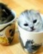 Kittens in cups.jpg