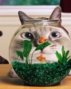 Kitty Fishing