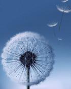 Blowing Grass Flower