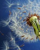 Blowing Grass Flower 2
