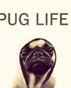 choose the thug life