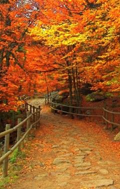 Free Autumn Walk phone wallpaper by bearyfine