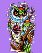 Colorful Owl.jpg wallpaper 1
