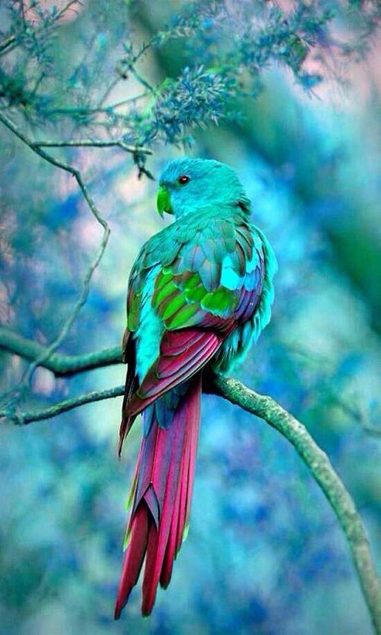 Free Cool Bird.jpg phone wallpaper by twifranny
