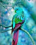 Cool Bird.jpg wallpaper 1