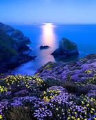 Moonlight Sea.jpg