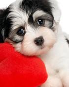 Cutest Puppy.jpg