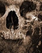 Rough Old Skull.jpg