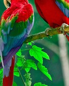 Beautiful Parrots.jpg
