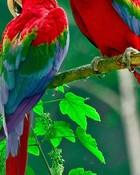 Beautiful Parrots.jpg wallpaper 1