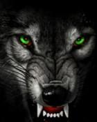 Angry Wolf.jpg