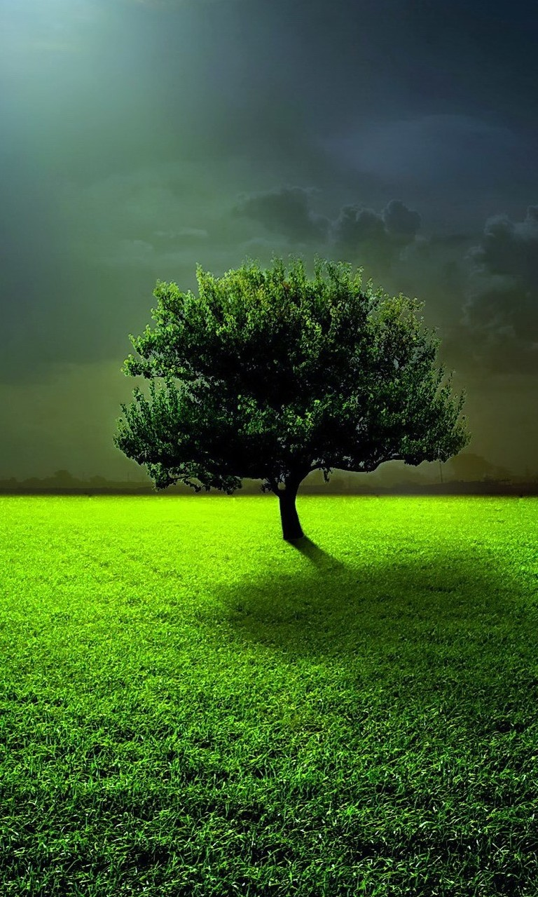 Free Lonely Tree.jpg phone wallpaper by twifranny