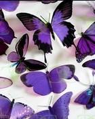 Purple-Butterflies-butterflies-17473487-1024-768.jpg