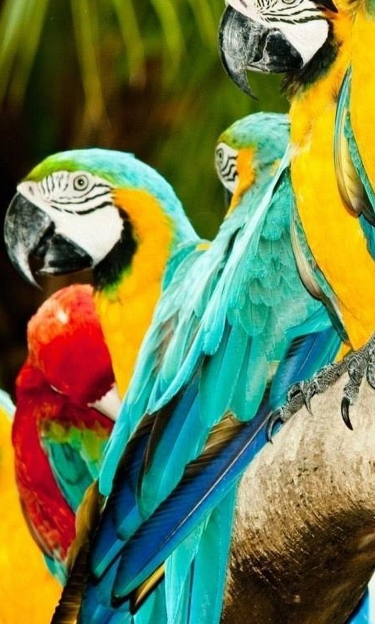 Free Many Parrots.jpg phone wallpaper by twifranny