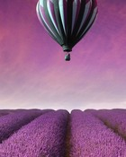 Lavender Fields and Balloon.jpg