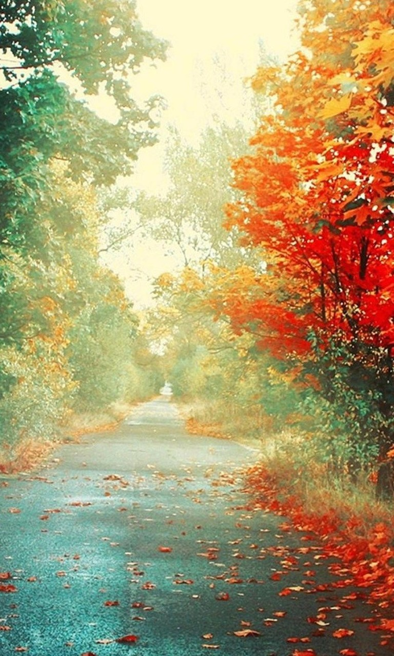 Free Red Leaves Autumn.jpg phone wallpaper by twifranny