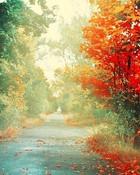 Red Leaves Autumn.jpg wallpaper 1
