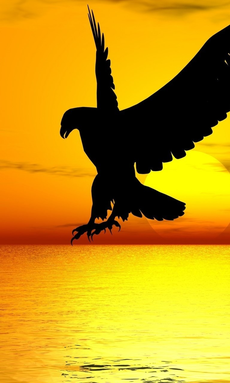 Free Eagle.jpg phone wallpaper by twifranny
