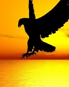 Eagle.jpg wallpaper 1