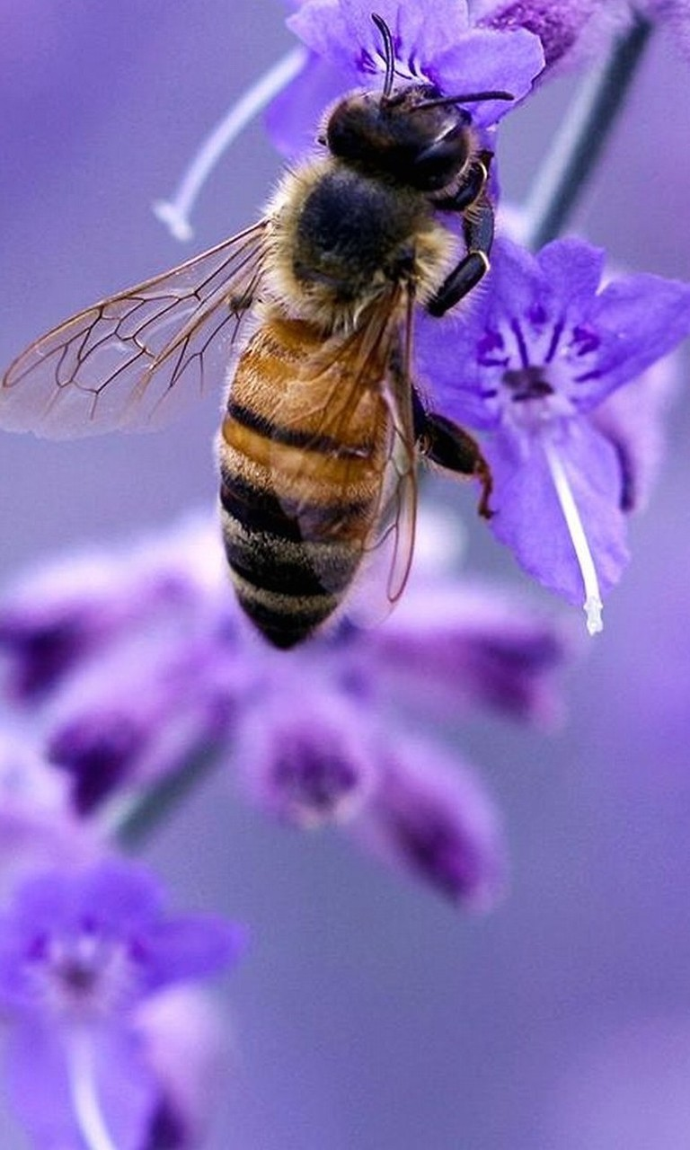 Free Bees and Flowers.jpg phone wallpaper by twifranny