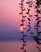 Sunset.jpg wallpaper 1