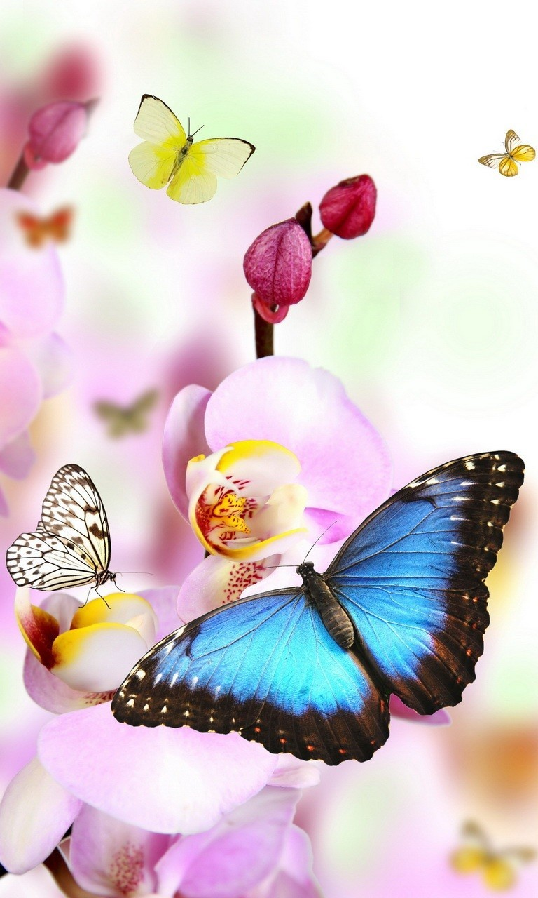 Free Butterflies.jpg phone wallpaper by twifranny