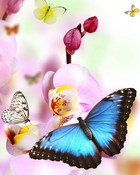 Butterflies.jpg wallpaper 1