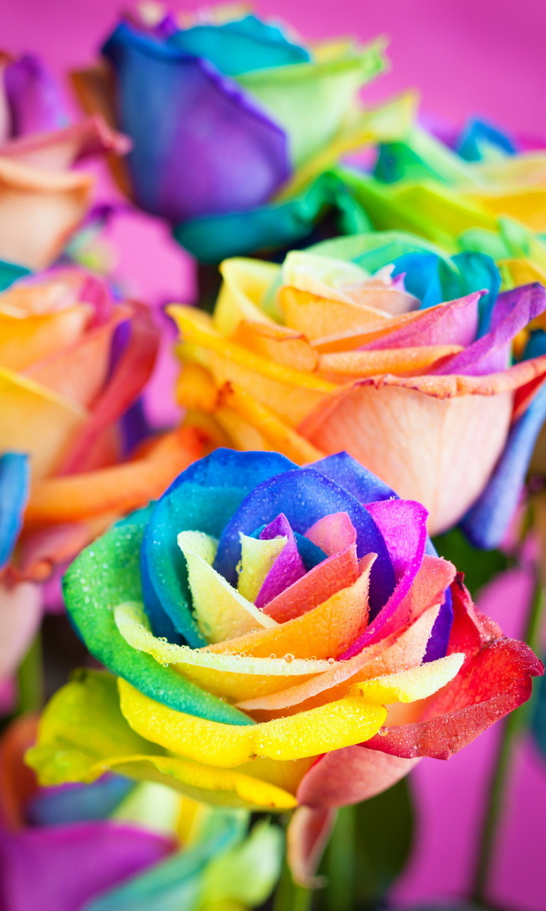 Free Multicolored Roses.jpg phone wallpaper by twifranny