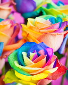 Multicolored Roses.jpg