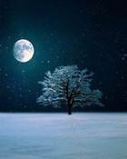 Winter.jpg wallpaper 1