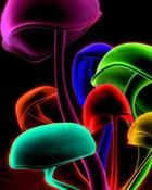 Colorful Mushrooms.jpg