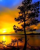 Sunset Tree.jpg wallpaper 1