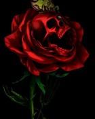 Skull and Rose.jpg