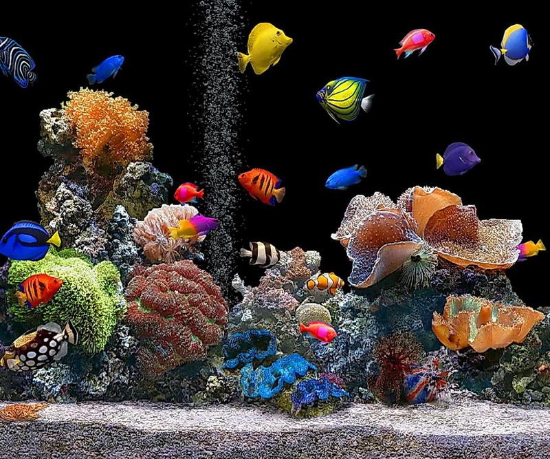 Free Aquarium  phone wallpaper by kitty_baby