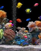 Aquarium  wallpaper 1
