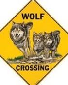 Wolf crossing