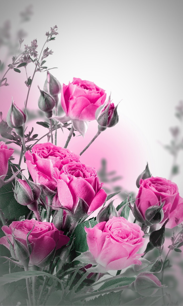 Free Pink Roses Wallpaper.jpg phone wallpaper by twifranny
