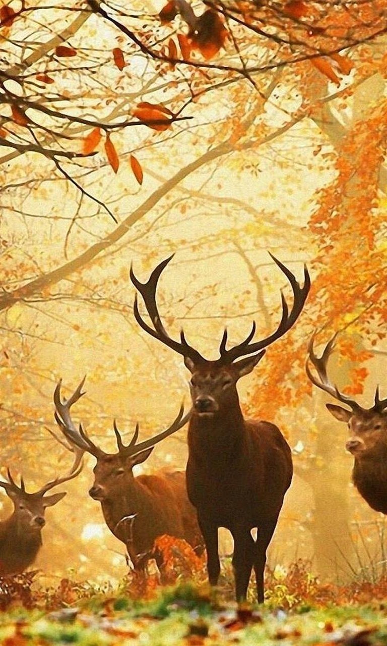 Free Forest animals.jpg phone wallpaper by twifranny